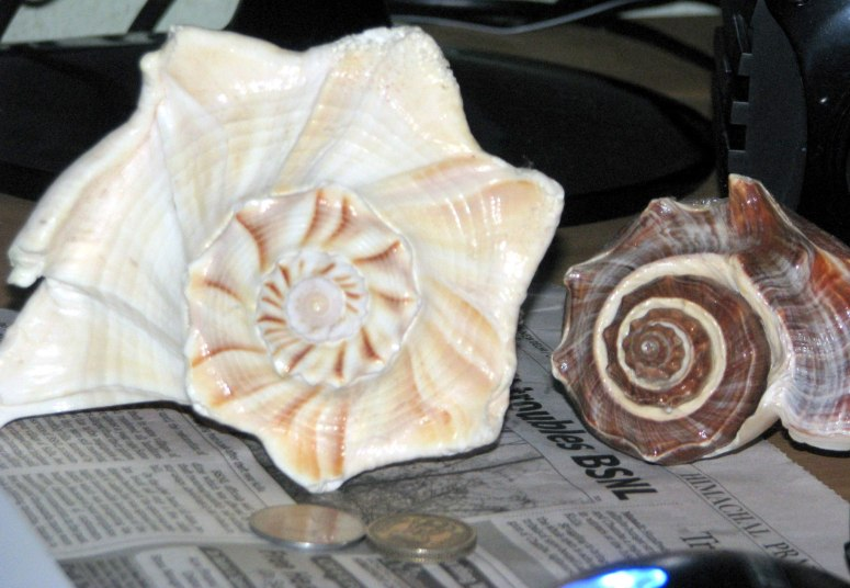 Conch shells I purchased from Puri Sea-Shore, at around 1000 INR for both. Back then I was quite interested about Physics, so I thought of these structures about how they correspond to symmetry and contingent nature of our Universe.
