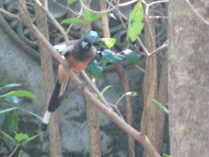 What bird is taht?