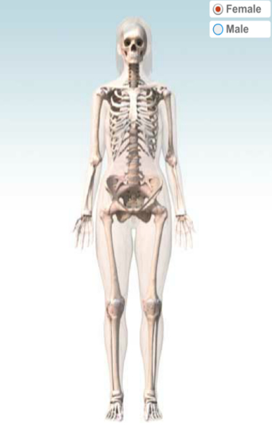 The human skeleton of a female body. The weight of human beings do not come all from the flesh and bones. The bones and flesh and fluid etc would constitute only 1/5th of the total weight  the rest 4/5th comes from the amount of space inbetween all such matter. The body weight therefore would drop to 20% if the matter such as bone and flesh would be extremely dense, but in such a case body would occupy a thin lamina of space but the resultant reactions inside the body would be destructive and the body would break apart like bricks hitting stones. So the body empty space is optimized and provides a cusion to all sorts of biological and physical reactions inside the body and in result increases the weight (by 80%) and volume (to the extent we see). Next time you are tempted to call someone a cow realize that its not the flesh he/she has. Its the ability of nature to put that flesh into a space for smooth functioning of the biological body which means a 5 times more space in terms of weight and given density of material the empty space occupies so much or so much space. And a s a result we swell.