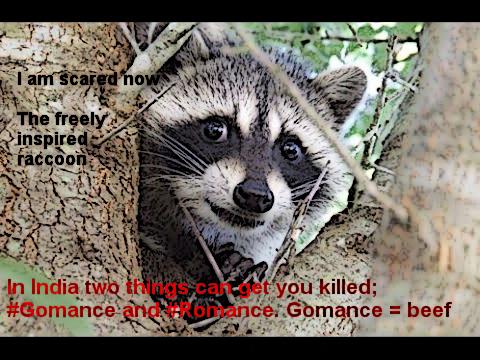raccoon13_edit