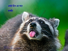 Click on image to access the idea of a freely inspired raccoon