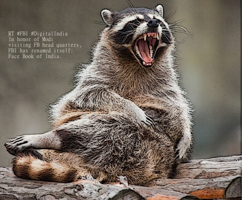 SHUTTERSTOCK ILLUSTRATION - RACCOON