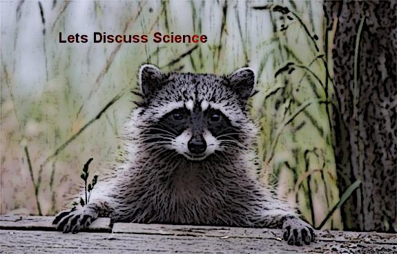 raccoon4_edit
