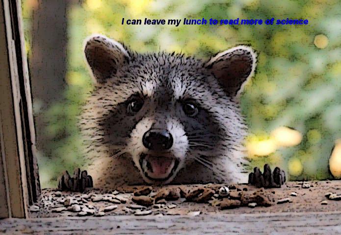 raccoon5_edit