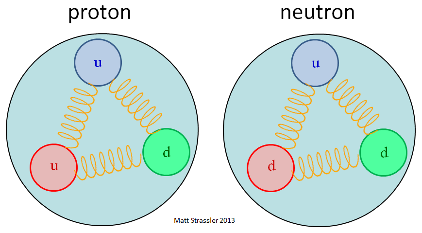 Protons and Neutrons as Baryons, that is an eternal bond of 3 quarks. uud and udd. Note that teh spring is the gluon. Much like a spring transmits a mechanical force these gluons have an assigned duty to transfer the strong nuclear forces from one participant to the other. Pic Credit; Matt Strassler's blog, profmattstrassler.com